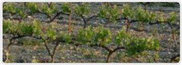 Leçon n°25: Types et styles de vins