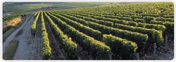 Vignes des Bouffants à Chavignol 26_3