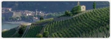 Les vins de la vallée du Rhône : des grands crus antiques aux premières AOC