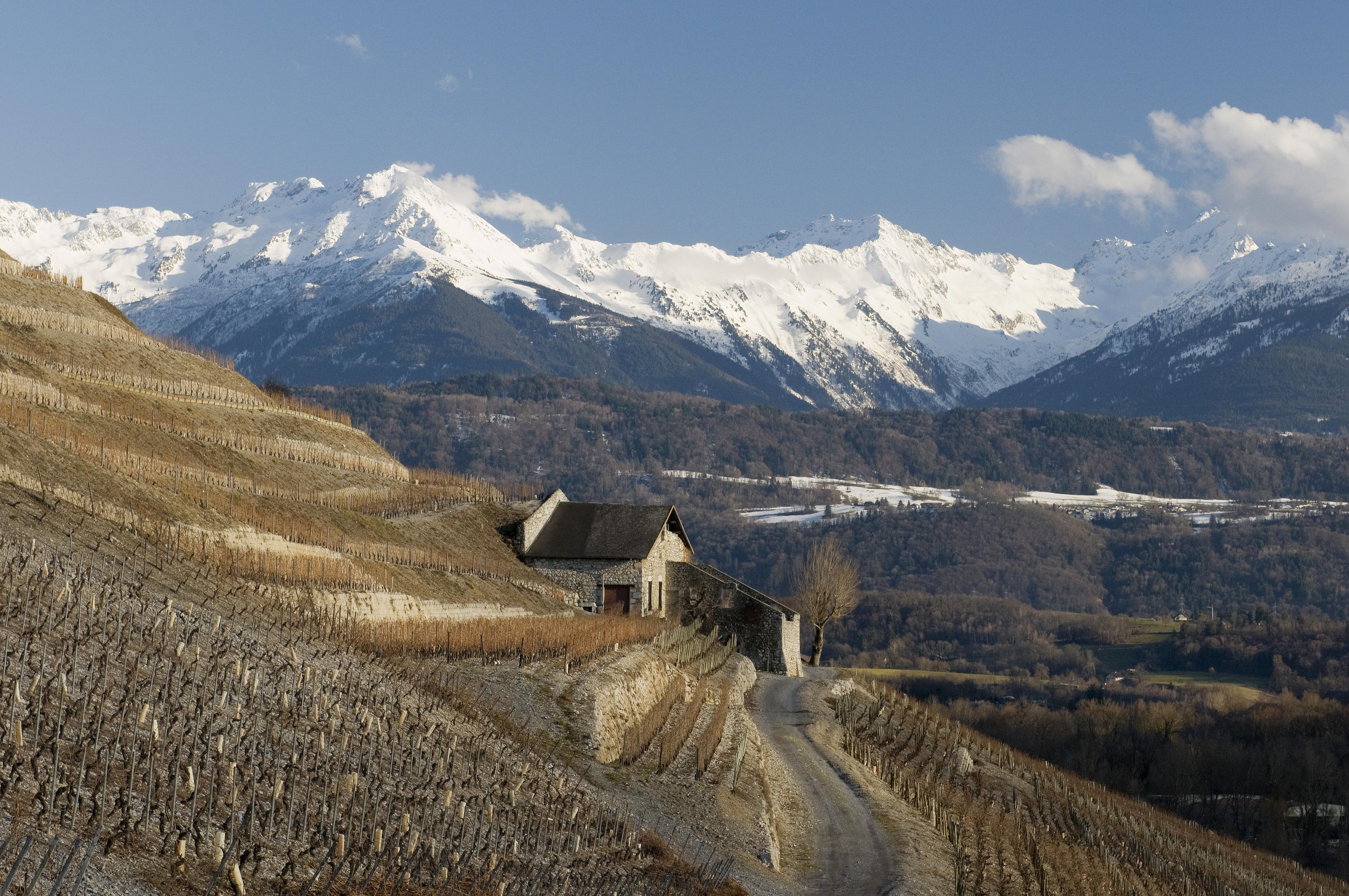 Chignin en Hiver vin de Savoie