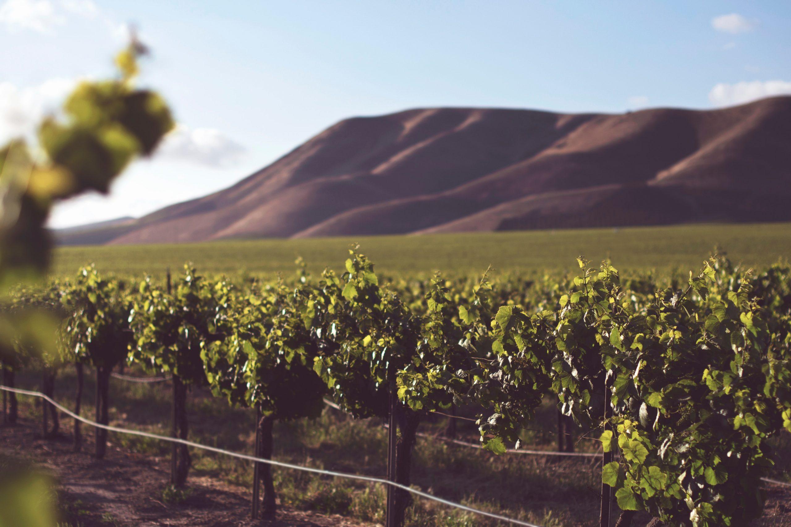 La viticulture bio